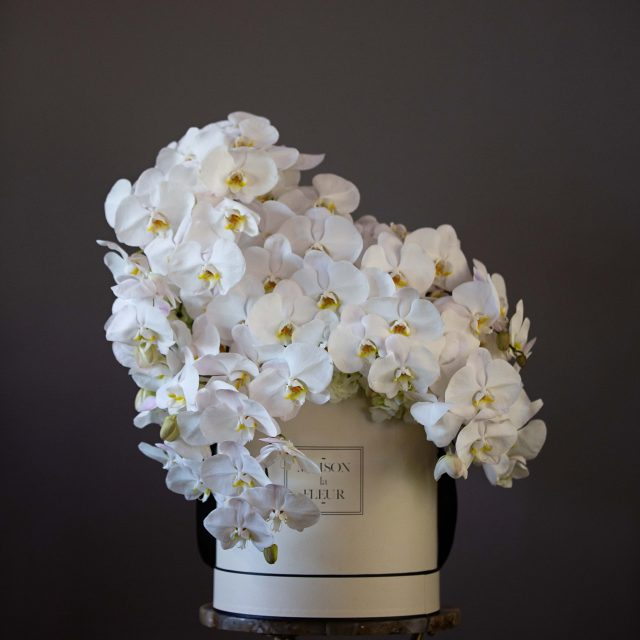 Orchid Lover - Beautiful White Phalaenopsis